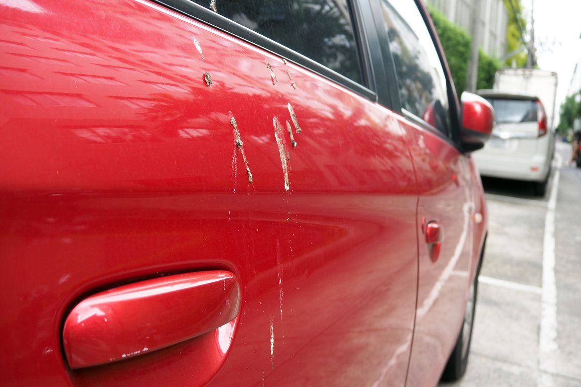 Close up on a red car's door with bird droppings on it